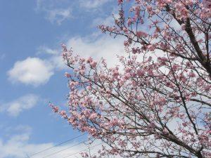 春の訪れ 散歩日和