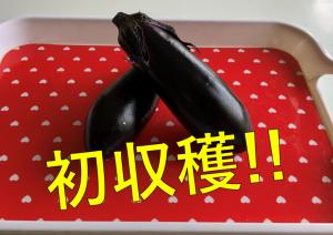 ときわタイムス 18号発行